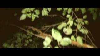 eRRdeKa x Janisis – Buntes Treiben (Video)